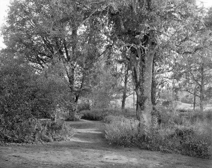 Dag Alveng - Sommerdag under ask, 2013.