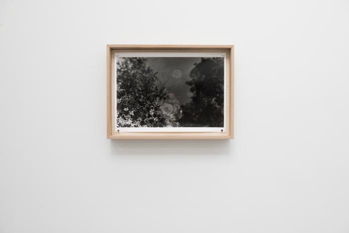 Kamilla Langeland - Forest Floor, fra avgangsutstillingen til Kunstakademiet i Oslo.