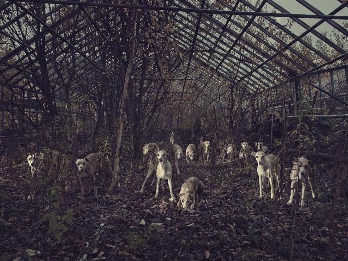 Steinar Christensen - Kerberos Total 2014 - Courtesy WILLAS contemporary