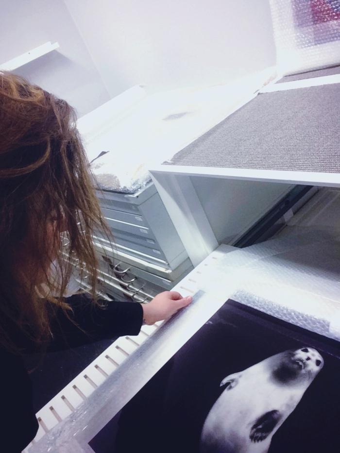 Anne Tharaldsen Haugen beskriver arbeidsoppgavene på galleriet som varierte. Her henter hun fram et av kunstner Per Manings karakteristiske fotografier av dyr.