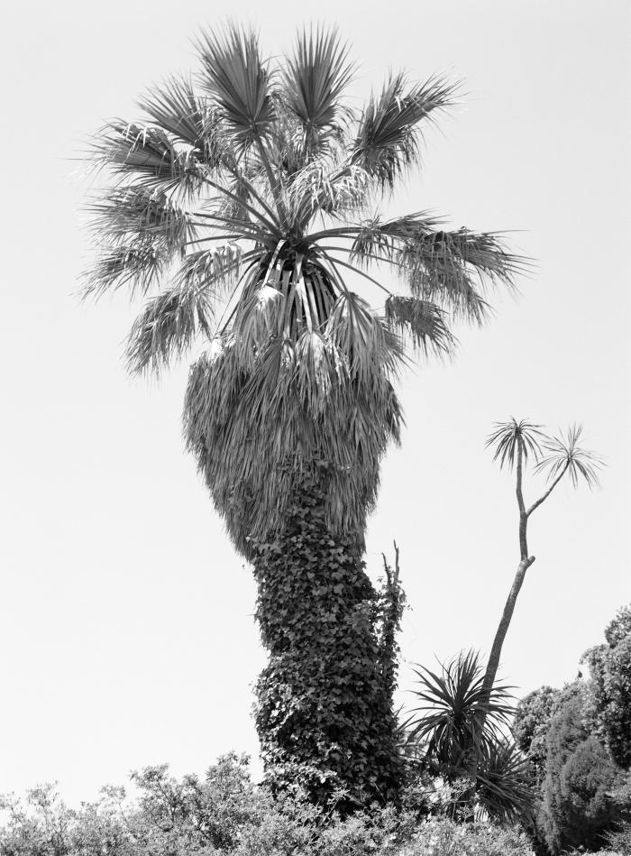 Christina Leithe Hansen - Palme (Palm), 2016.