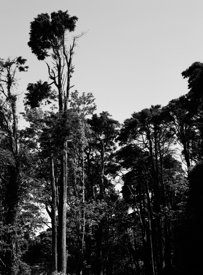 Christina Leithe Hansen - Träder (Trees), 2016.